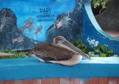 Cormoran-Galapagos