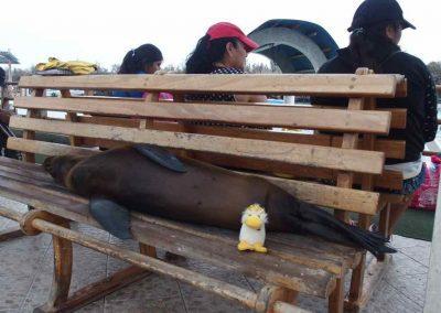 Couinn-Couinn et un lion de mer - Galapagos