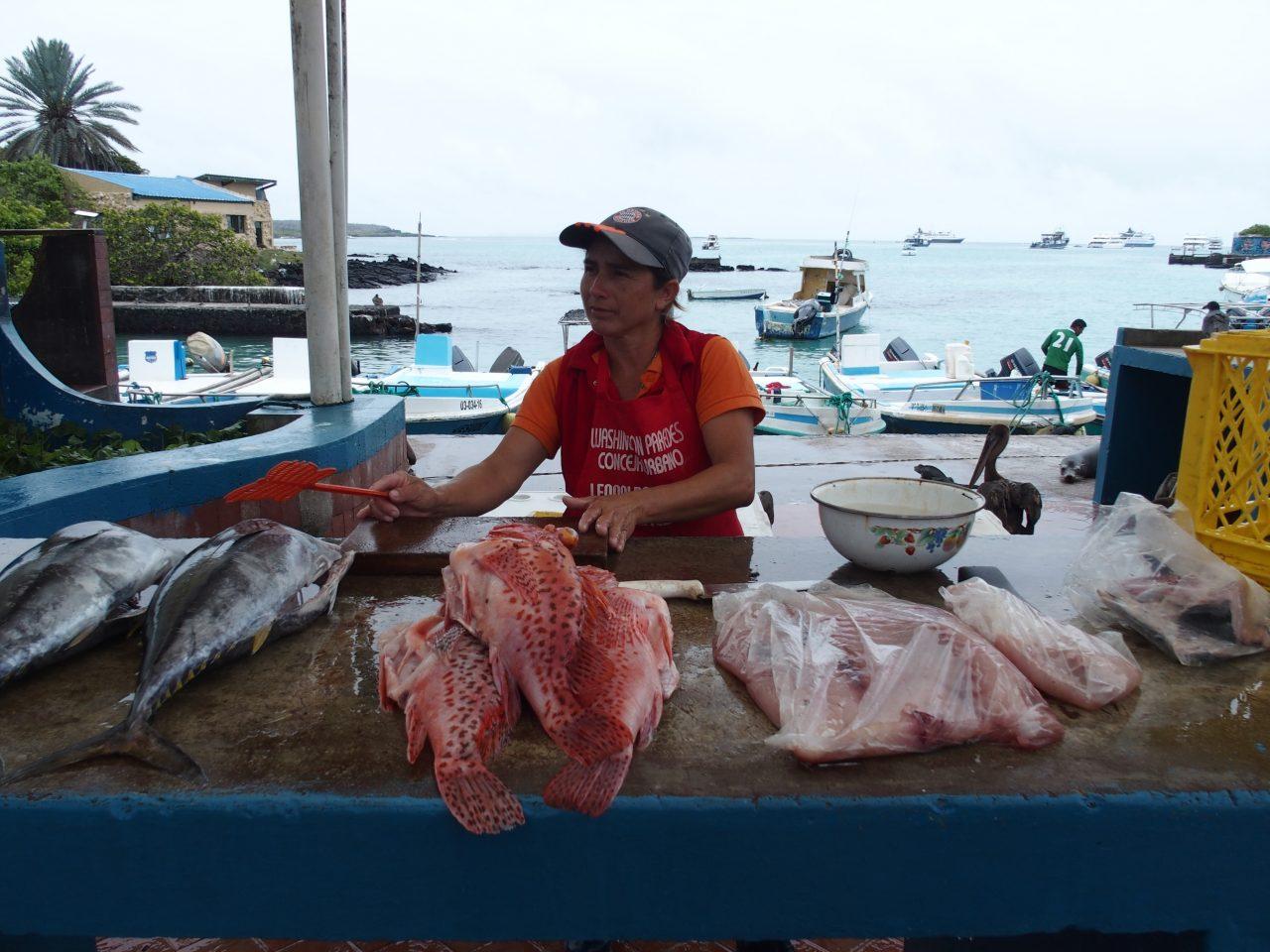 Fishmarket - Galapagos