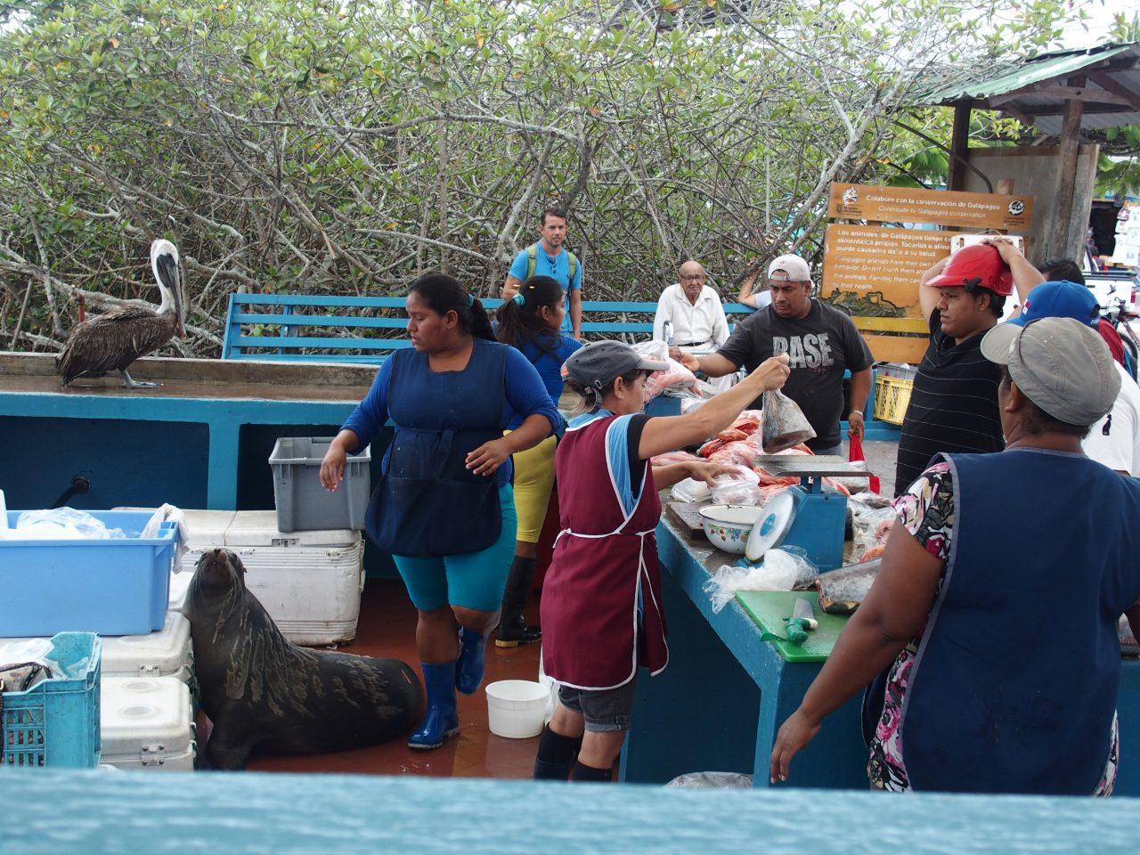Pêcheur de langoustes - Galapagos