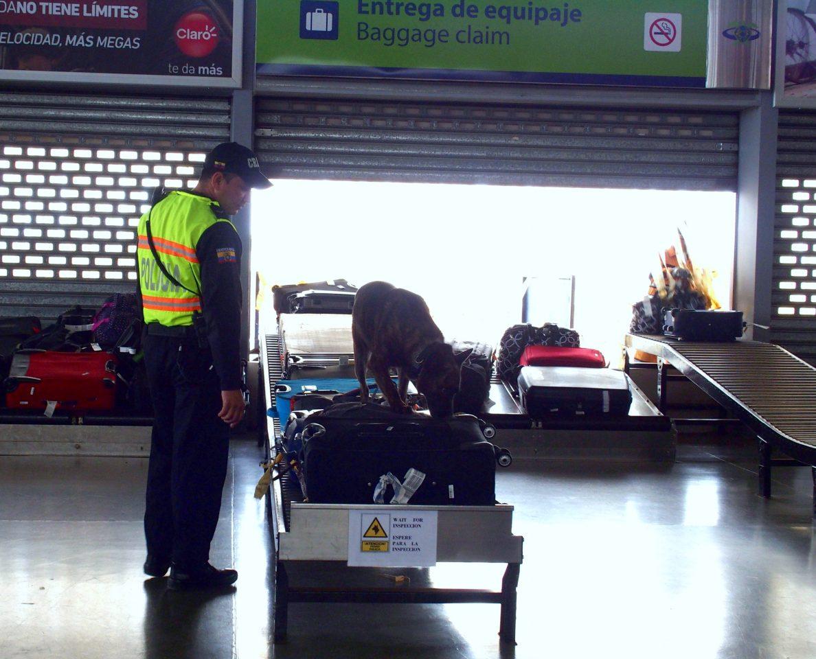 Contrôle des bagages par les chiens policiers à l'arrivée sur les îles Galapagos