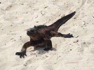 Voyage en solo aux Galapagos sur l'île de Santa Cruz
