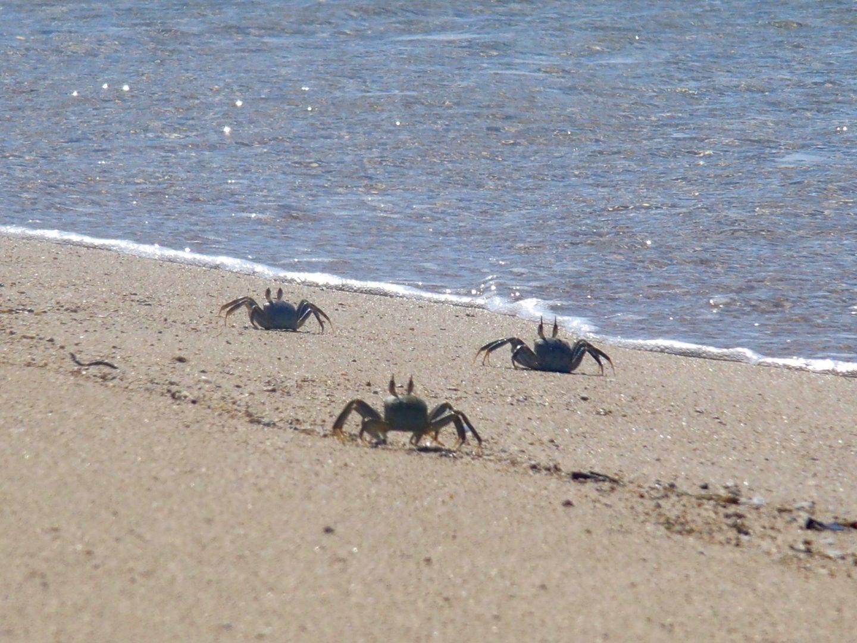Crabes Ibo - Mozambique