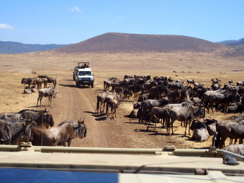 4x4 au milieu des gnous Ngorongoro Tanzanie