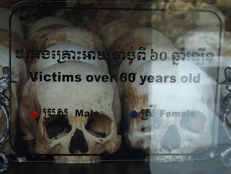 Crânes victimes 60 ans Musée génocide Phnom Penh Cambodge