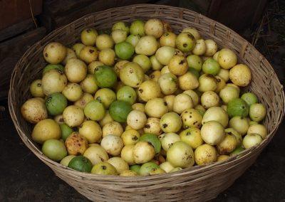 Fruits marché Timphu Bhoutan
