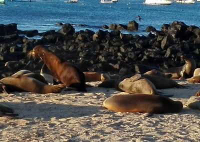 Otaries Galapagos Equateur