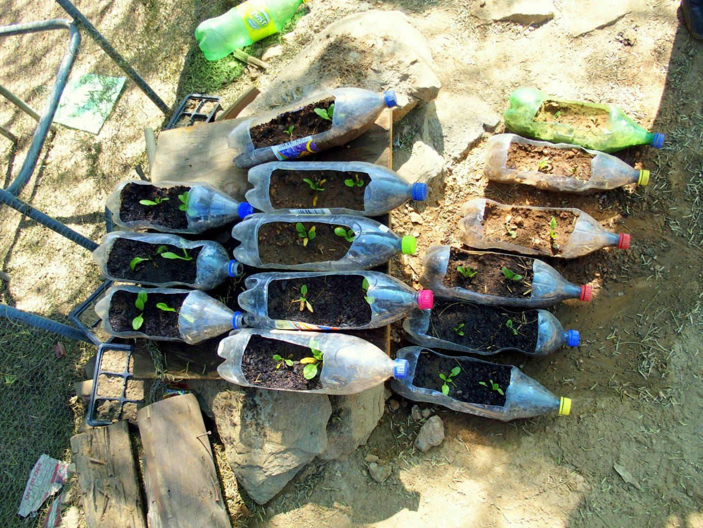 Pépinières dans bouteilles plastiques jardin HISA Namibie