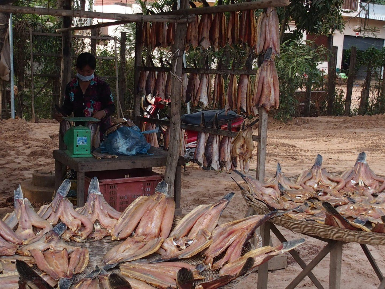 Préparation vente poissons Tonle Sap Cambodge