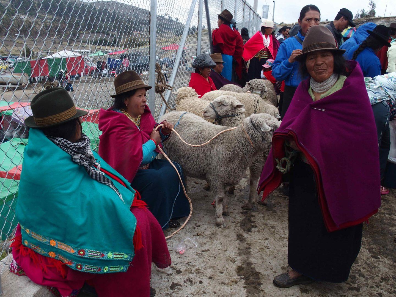 Vendeuse de moutons marché de Guamote Equateur