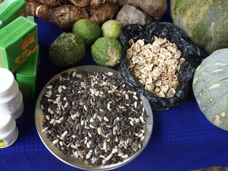 Noix de jatropha Ngurdoto Tanzanie
