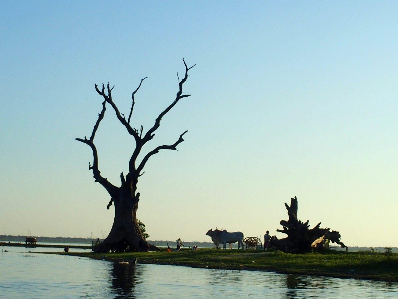 Vie agricole sur lac U Bein Amarapura Birmanie