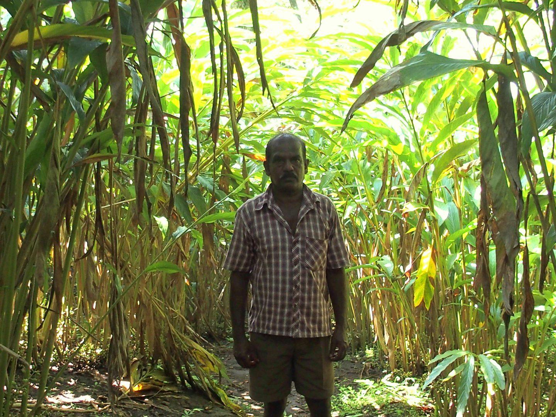 Avec mon guide dans plantation cardamone Kerala Inde