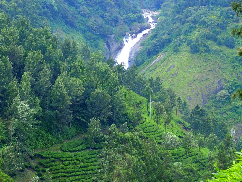 Cascade et plants de thé Munnar Kerala Inde