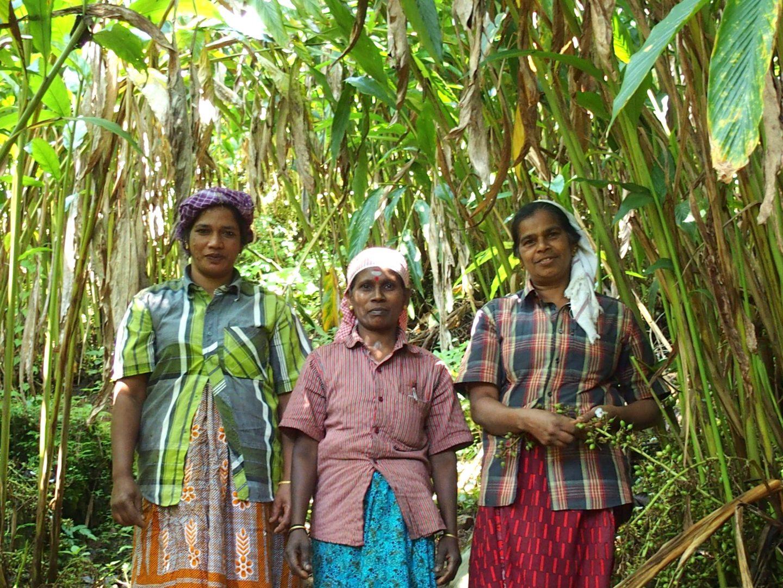 Cueilleuses cardamone Kerala Inde