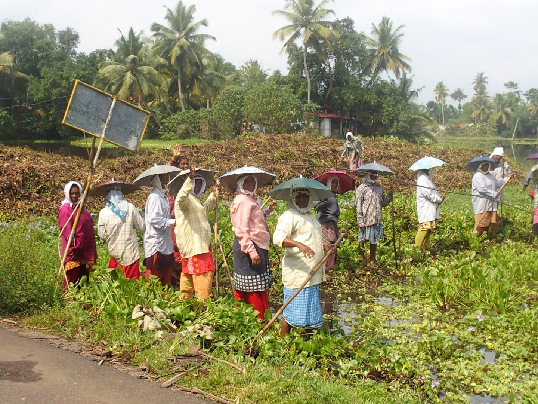 Femmes dans les champs de jacinthe Allepezha Inde