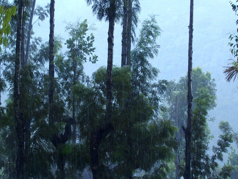 Pluie de mousson Kerala Inde
