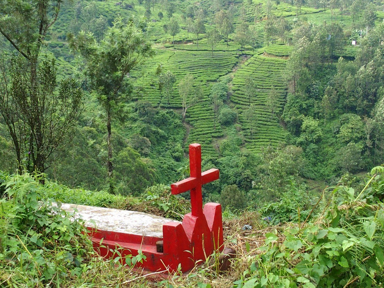 Tombe dans plantation thé Munnar Kerala Inde