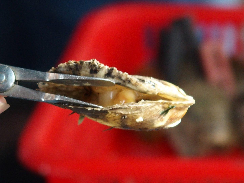 Introduction perles dans huitre Baie Halong Vietnam
