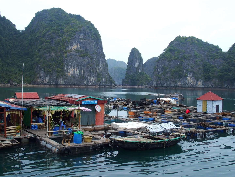 Village flottant Baie Halong Vietnam