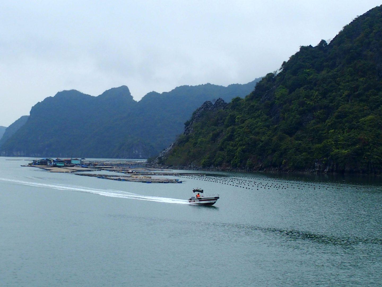 Village flottant et parcs à huitres Baie d'Halong Vietnam