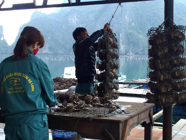 Visite ferme ostréicole Baie Halong Vietnam