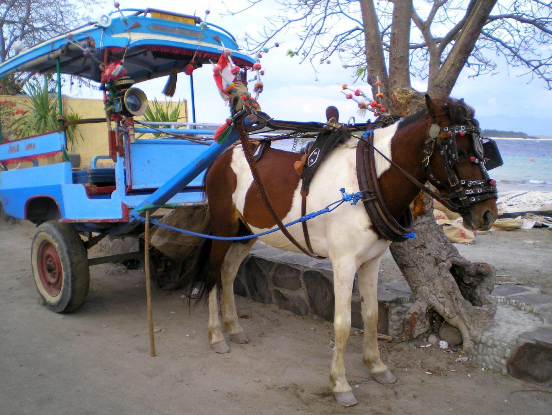 Transport en cidomo Gili Trawangan Bali