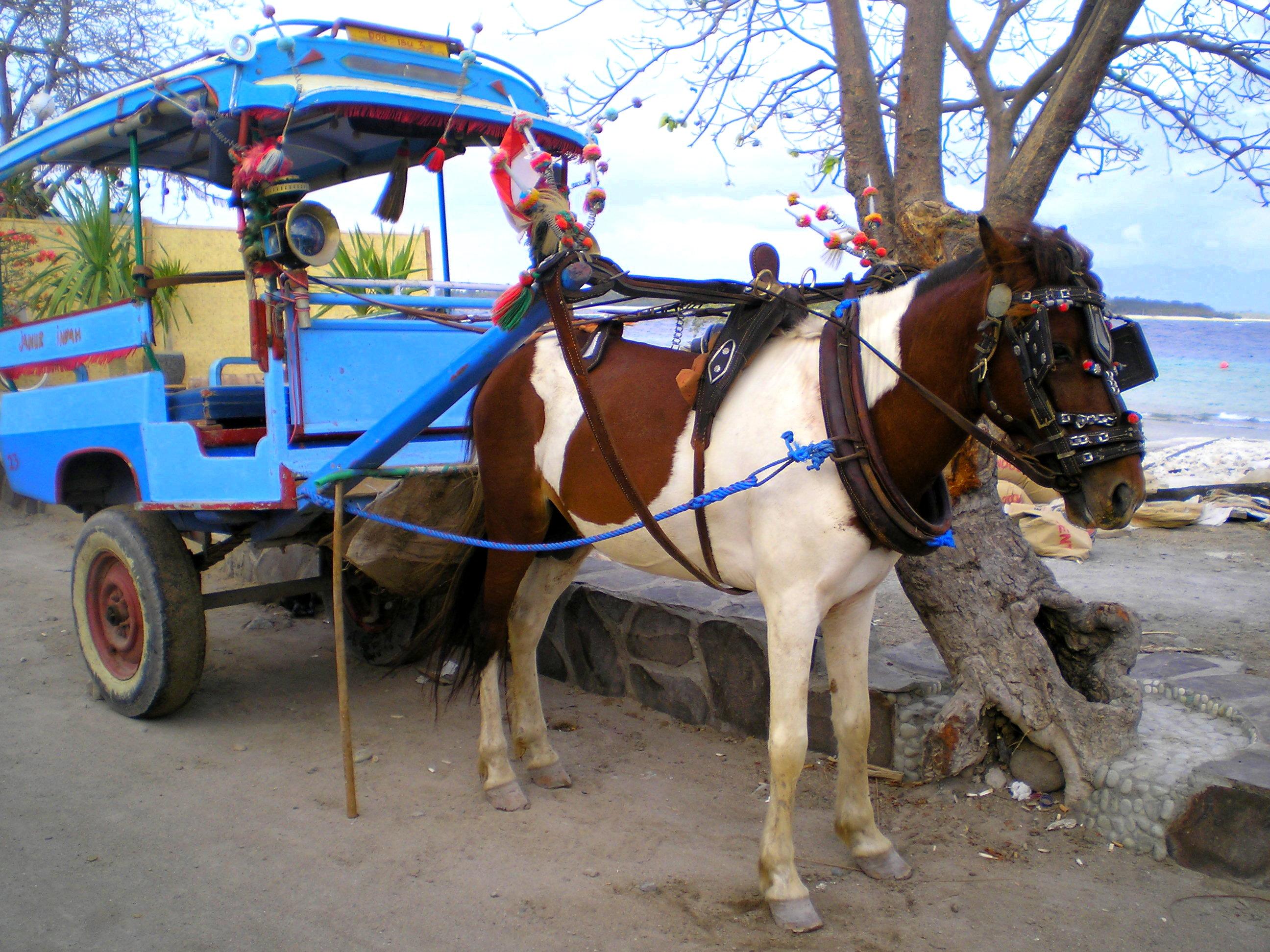 Le cidomo, cheval à charette pour transport doux sur l'île de Trawangan