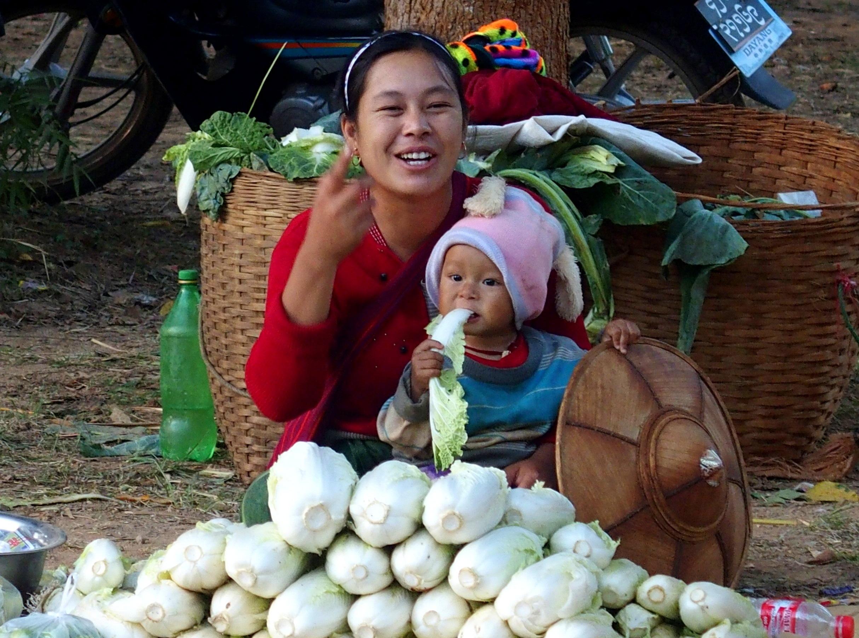 Petit mangeur de choux marché Bagan Birmanie