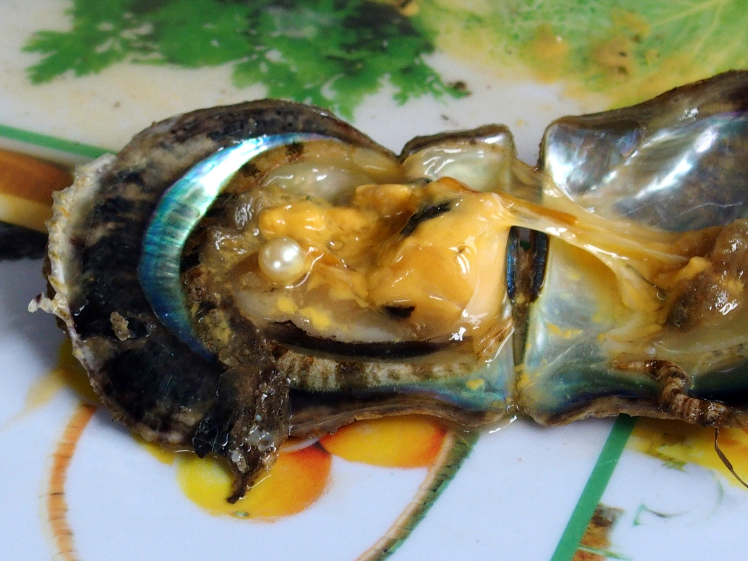 Belle perle nacrée baie d'Halong souvenirs du Vietnam