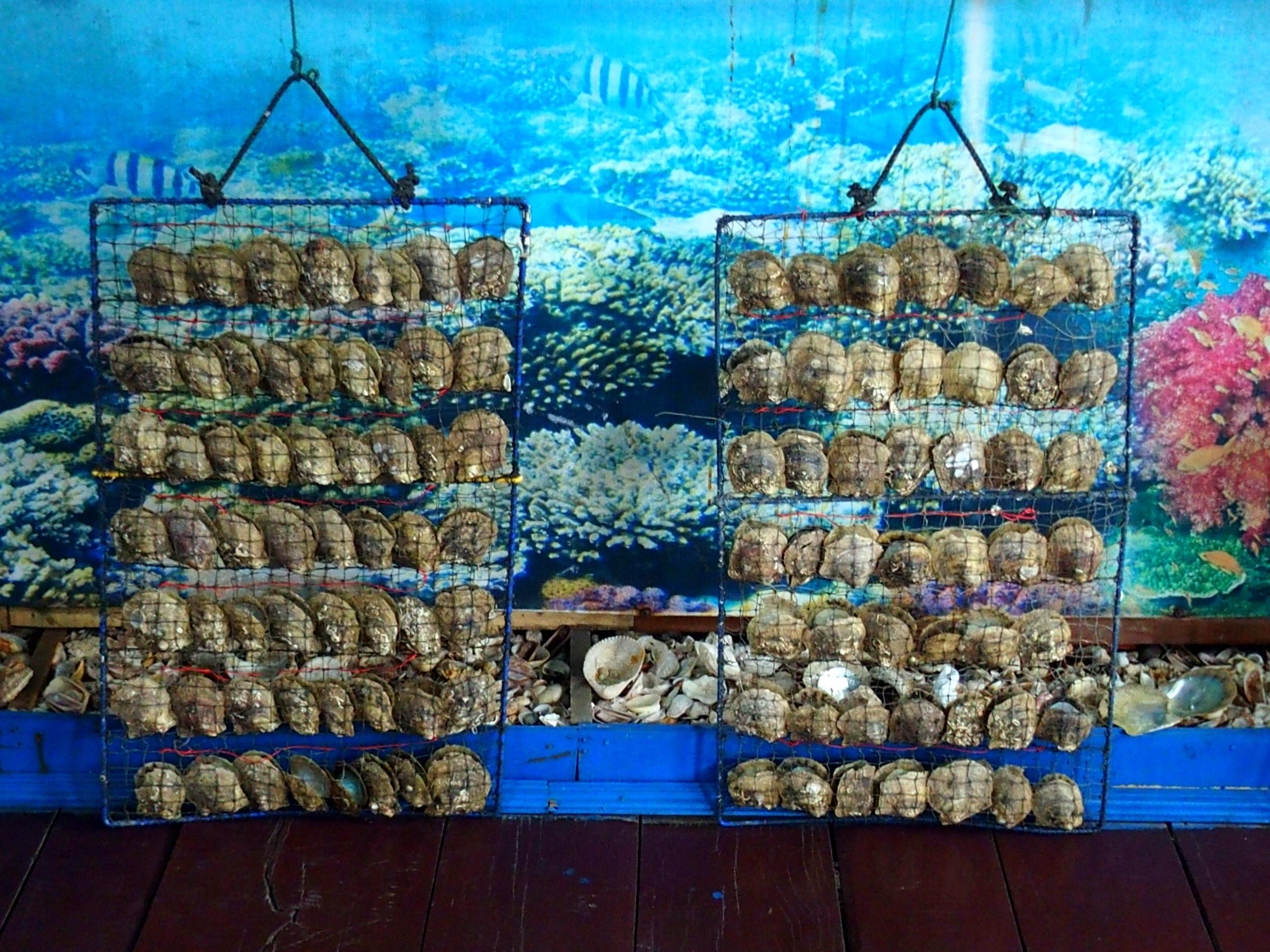 Entrée ferme perlière baie d'Halong souvenirs du Vietnam