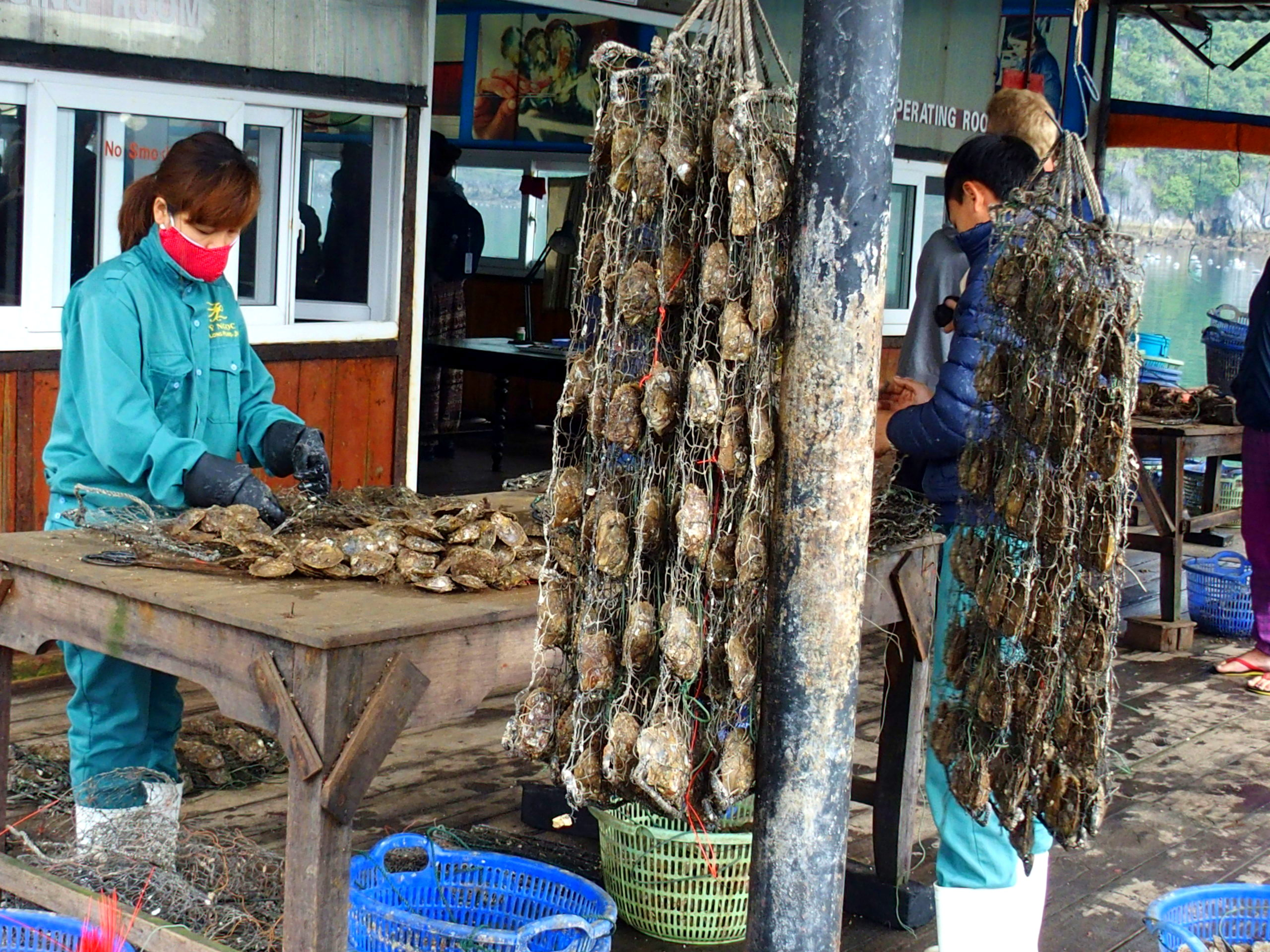 Nettoyage des huitres ferme perlière baie d'Halong souvenirs du Vietnam