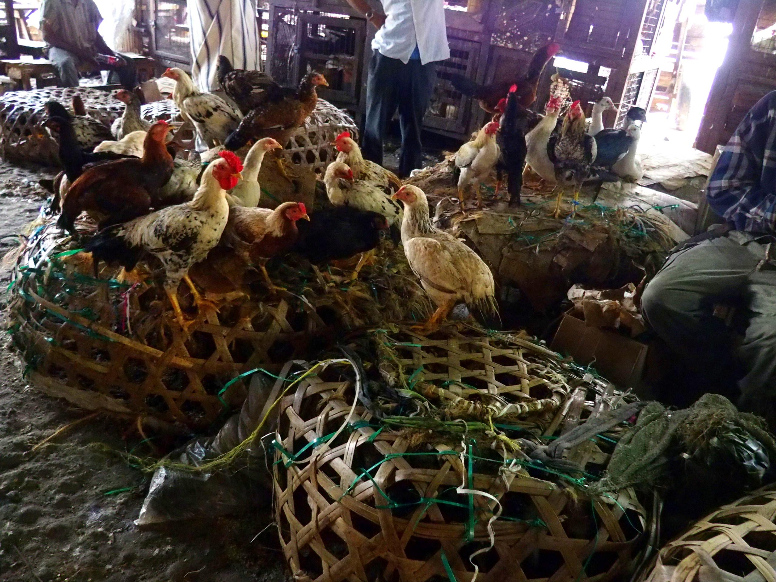 Marché aux volailles Stone Town Zanzibar