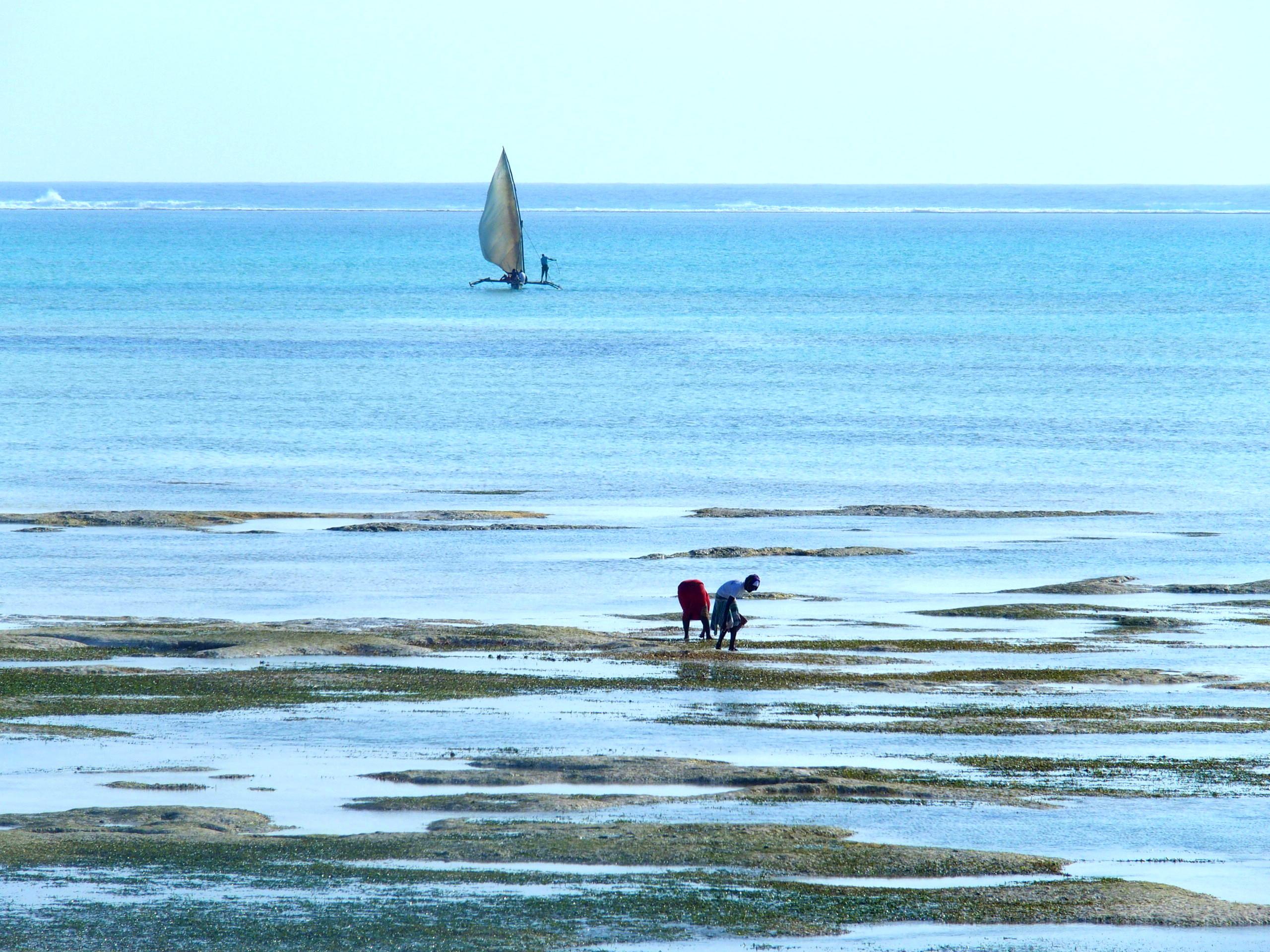 Pêche en mer et à terre Pongwe Zanzibar.