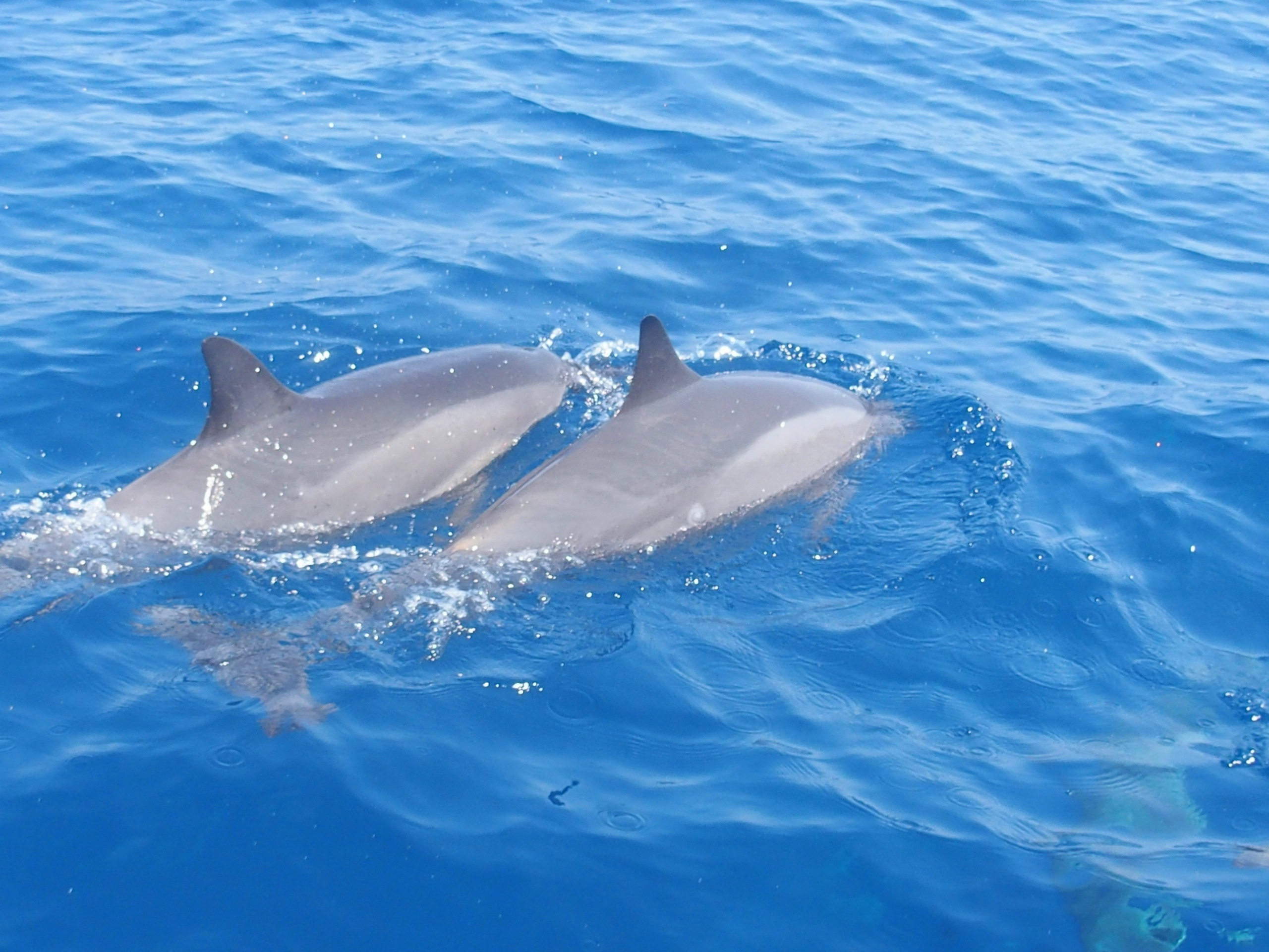 Duo de dauphins Nosy Be