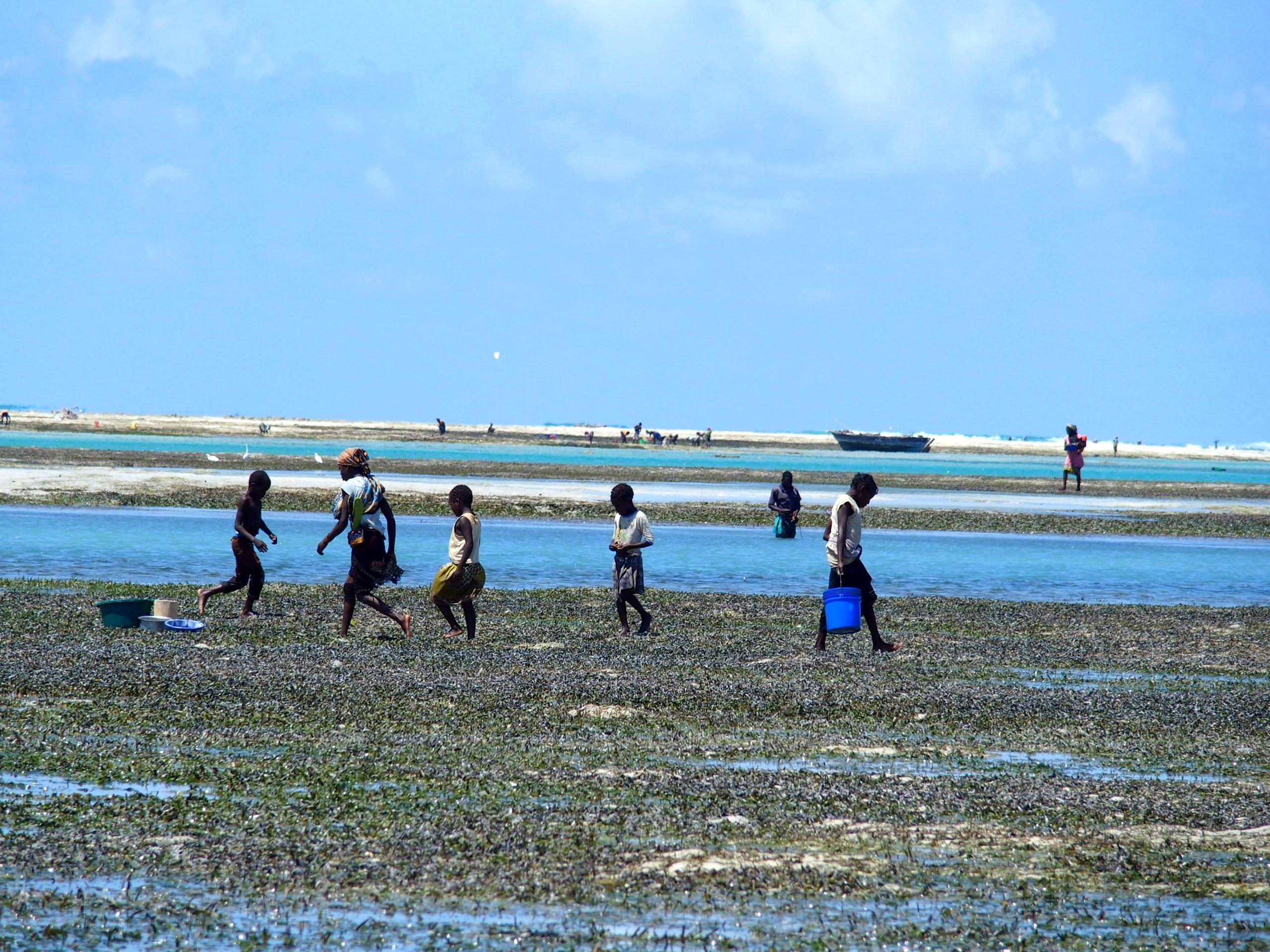 Femmes et enfants à la pêche aux coquillages Mozambique.