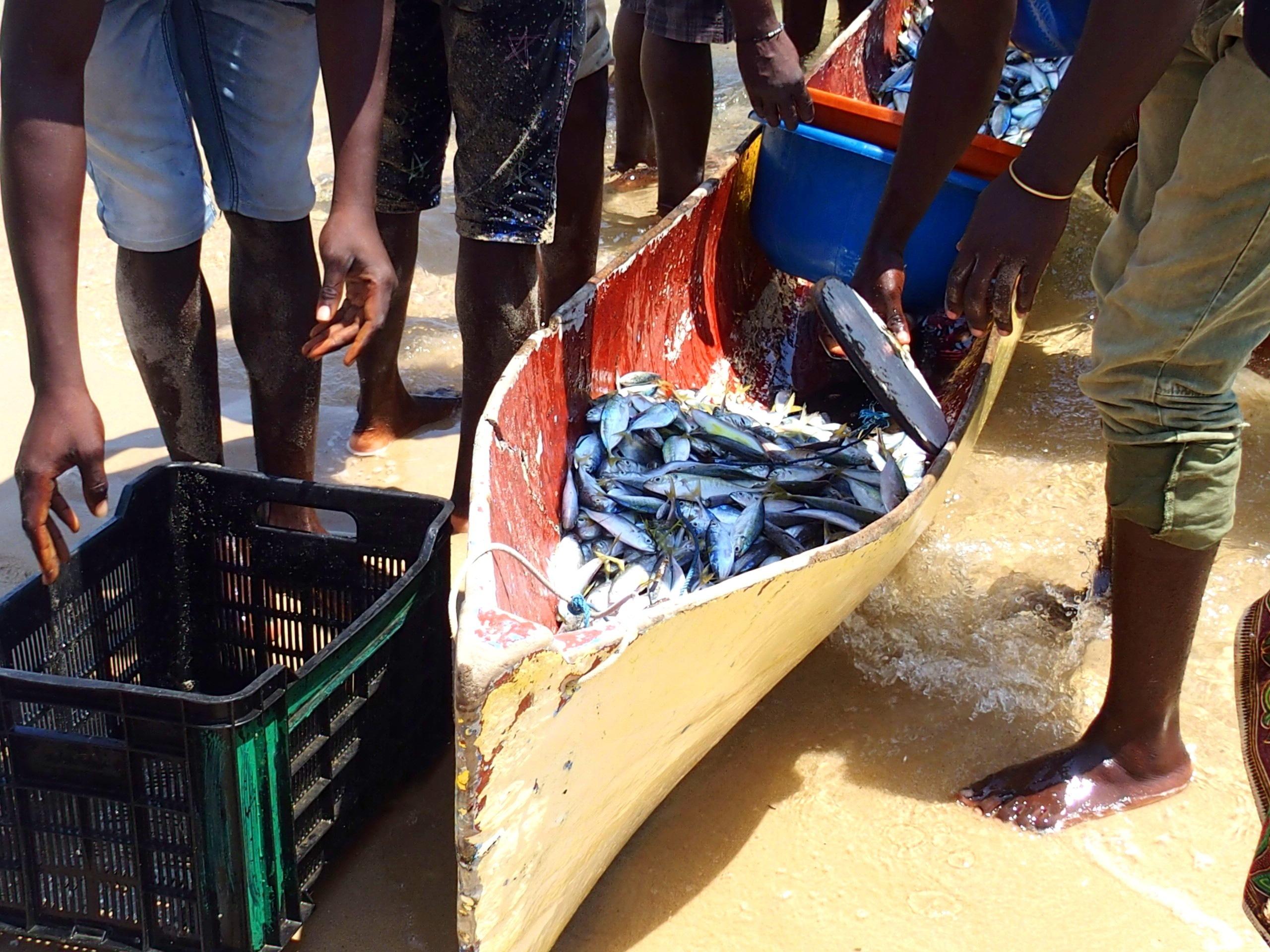 Pirogue au retour de pêche Pemba Mozambique