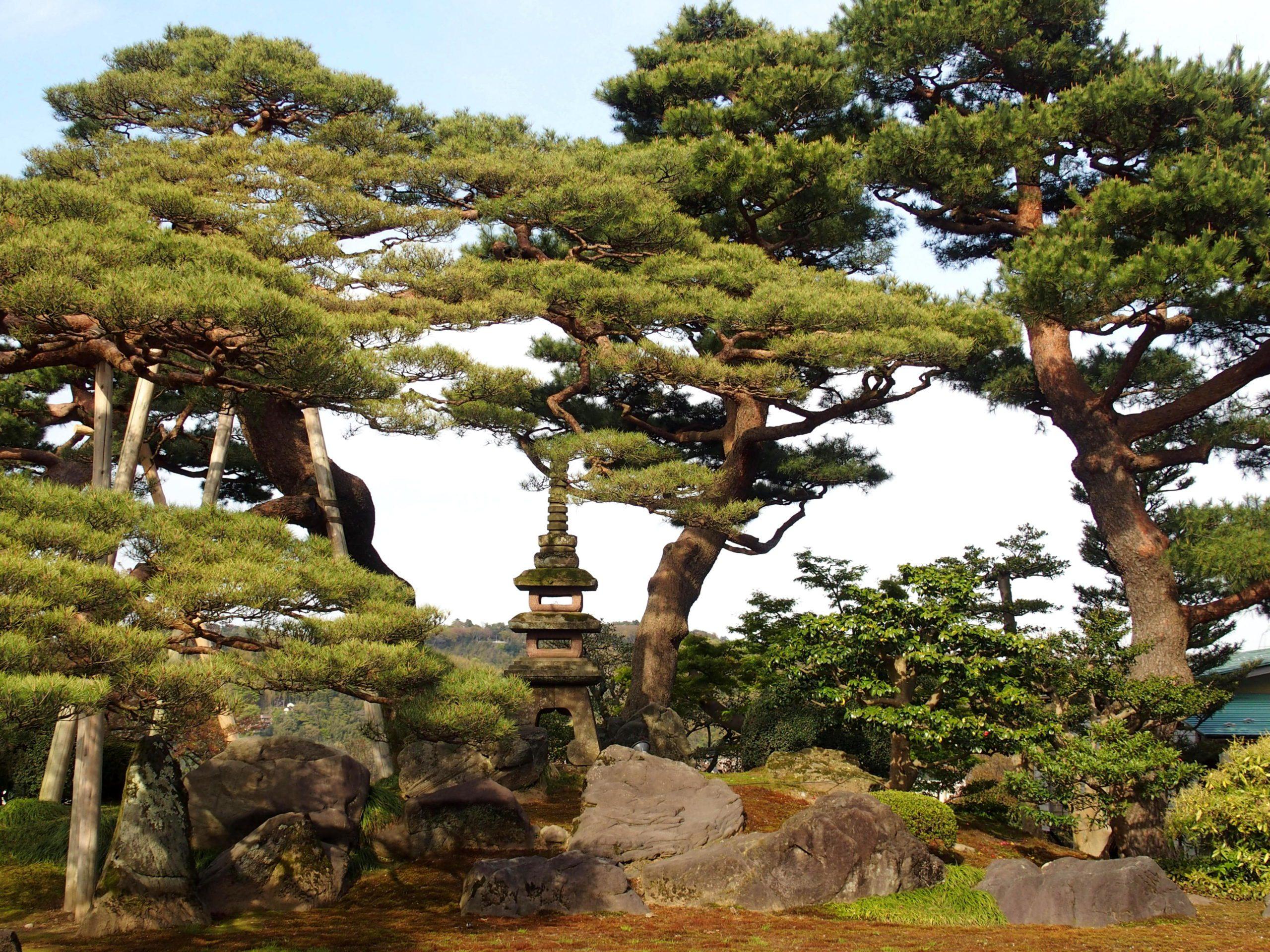 Lanterne et bonsaï dans jardin de Kenrokuen Kanazawa Japon