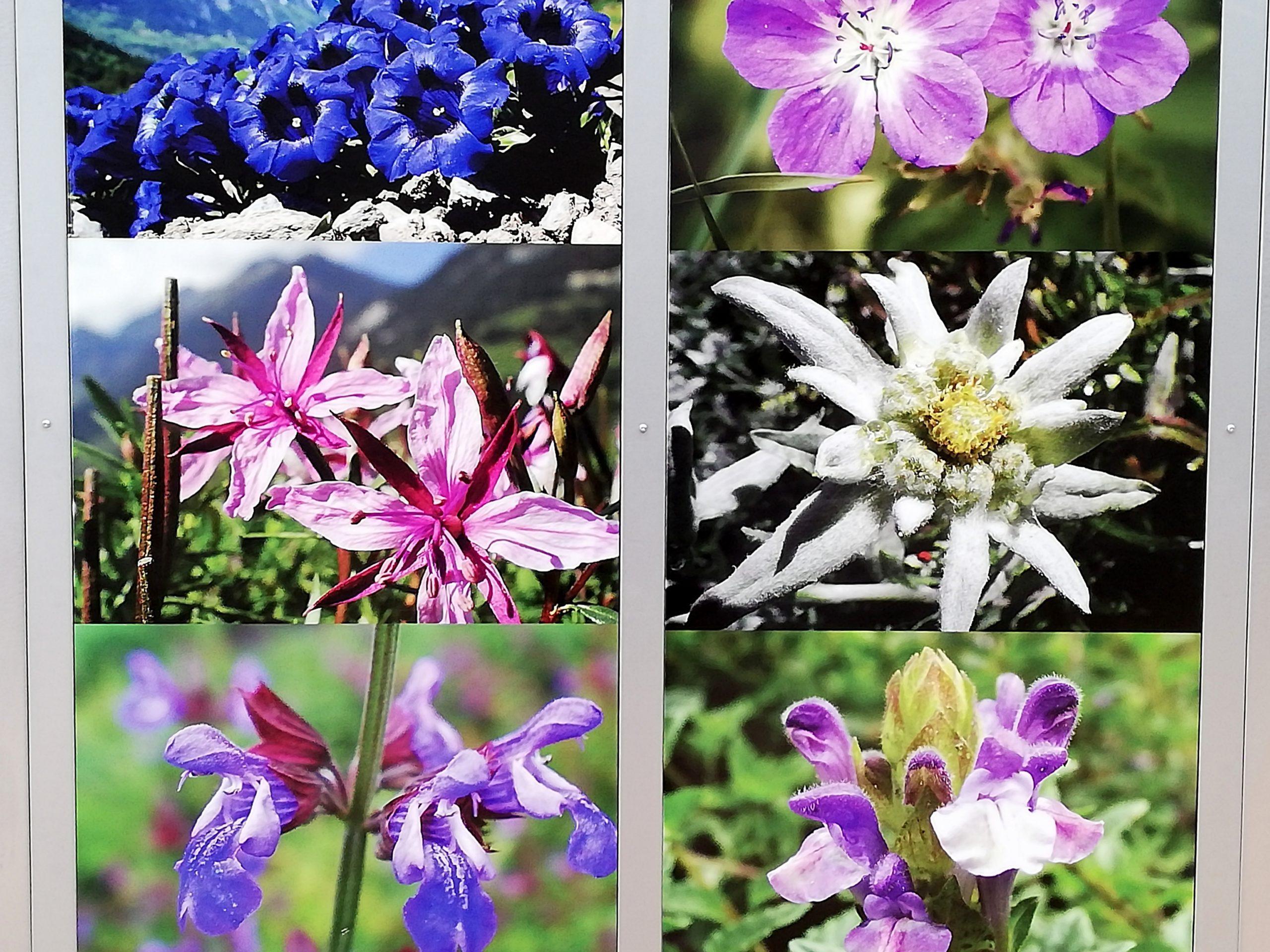 Plantes aromatiques Valplantes et Ricola Suisse