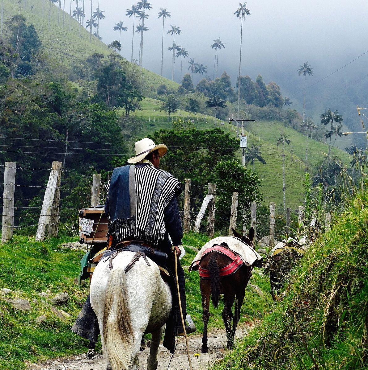 Balade à cheval dans la vallée de Cocora