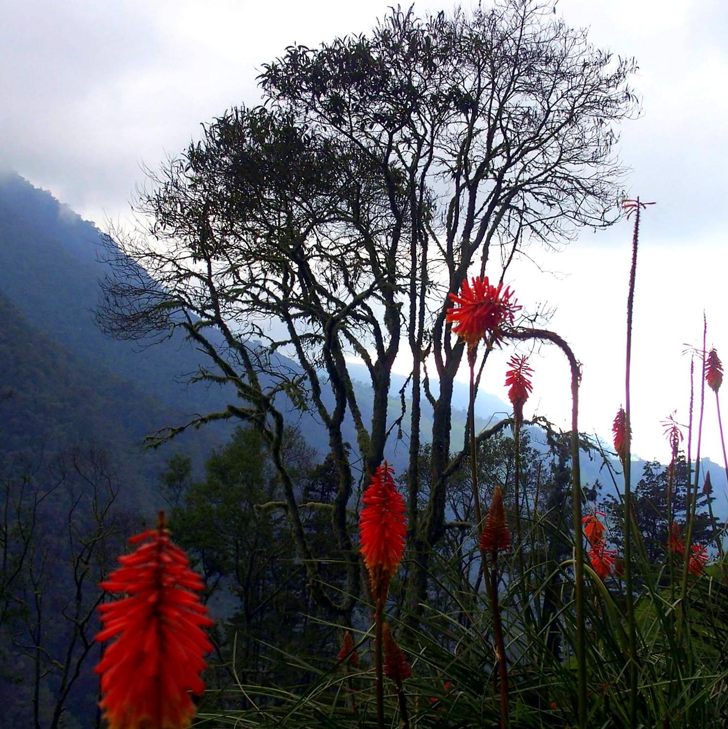 Fleurs et végétation dans la vallée de Cocora Colombie