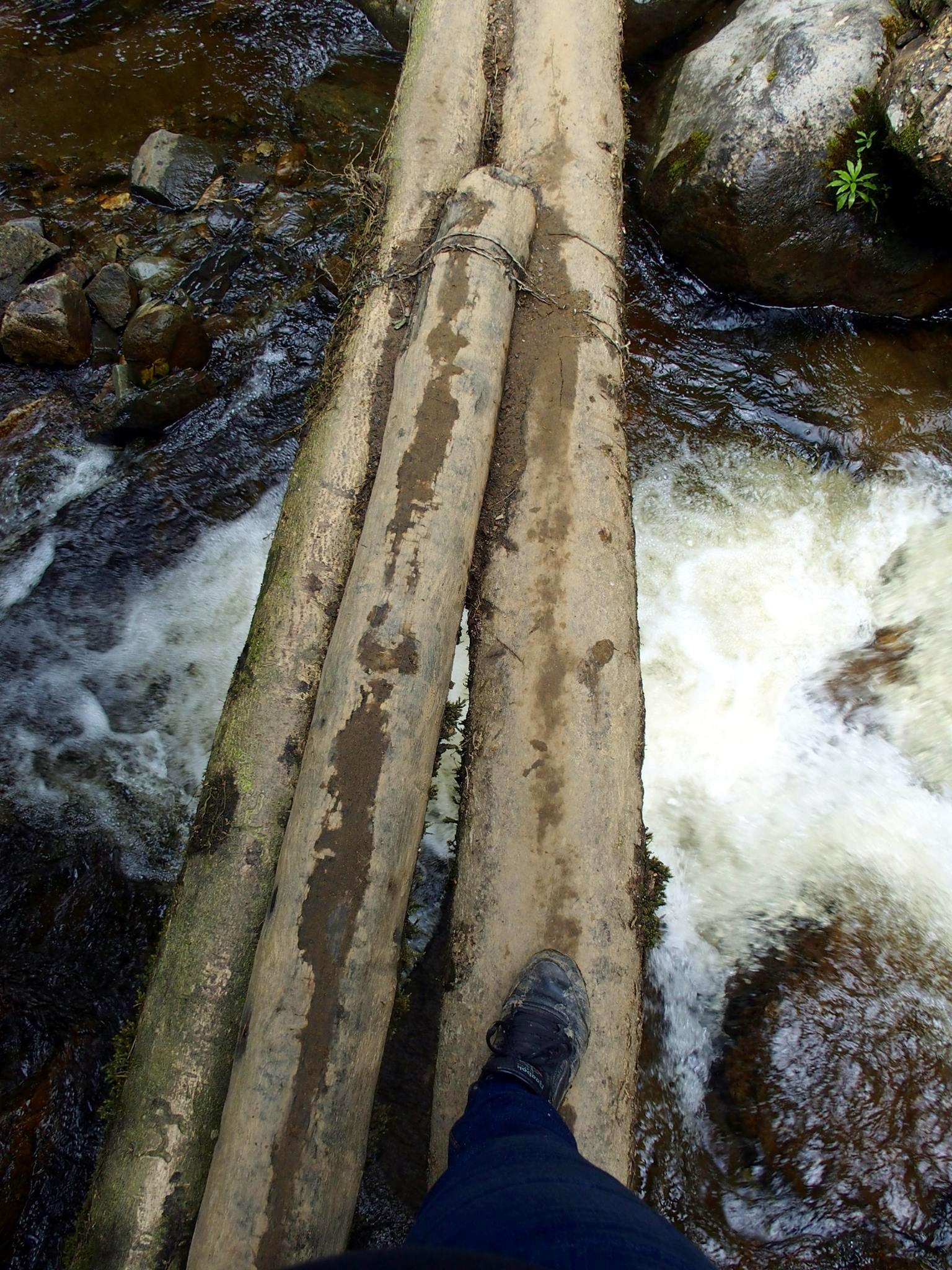 Passerelle rondins bois vallée de Cocora Salento Colombie