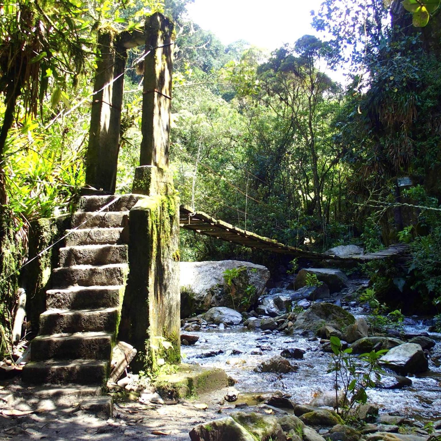 Pont suspendu dans la jungle vallée de Cocora Salento