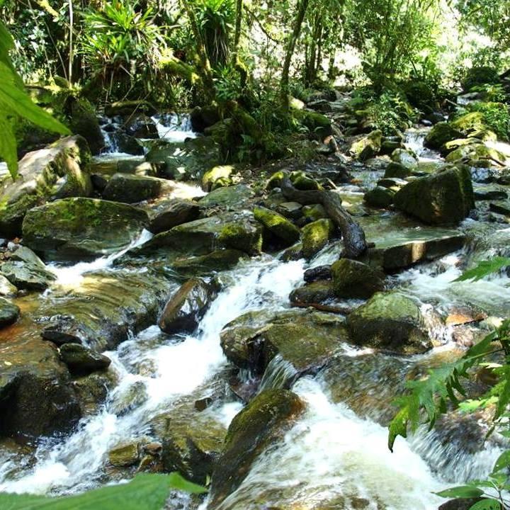 Rivière dans la vallée de Cocora Salento