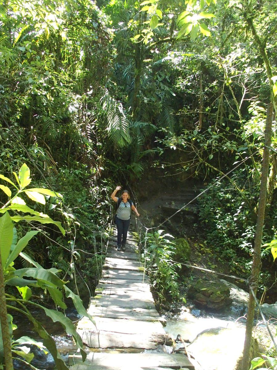 Traversée de passerelle dans vallée de Cocora Salento Colombie