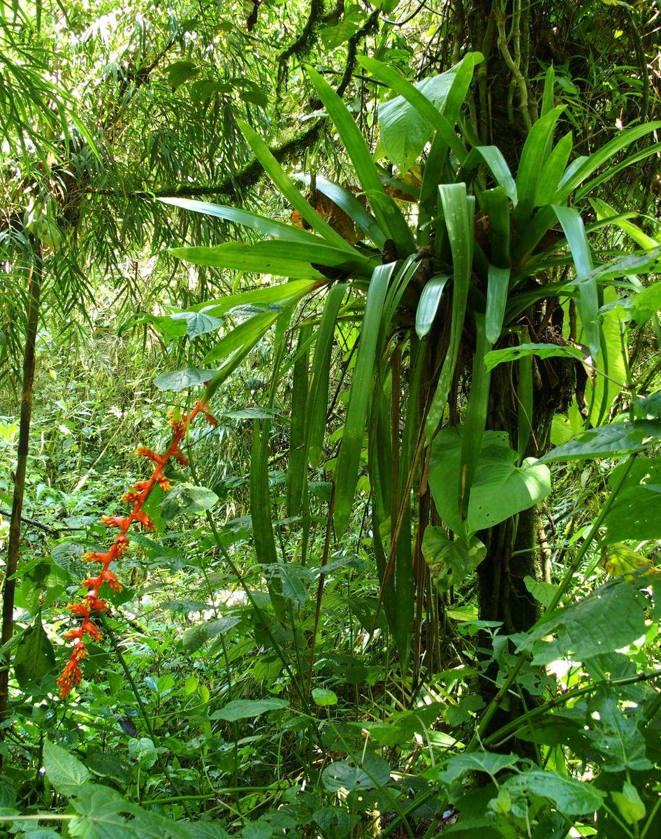 Végétation dans vallée de Cocora Salento Colombie