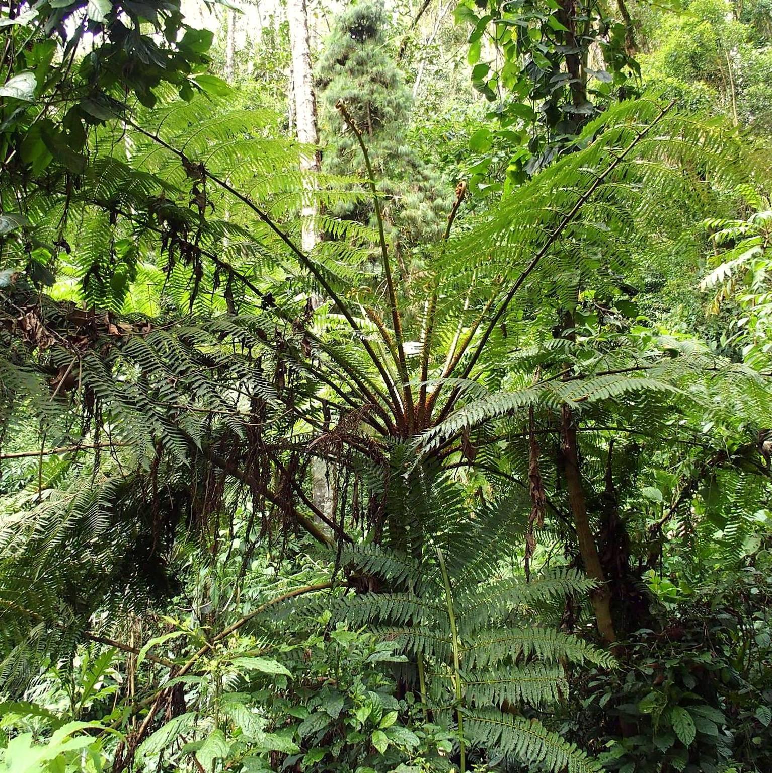 Végétation luxuriante vallée de Cocora Salento