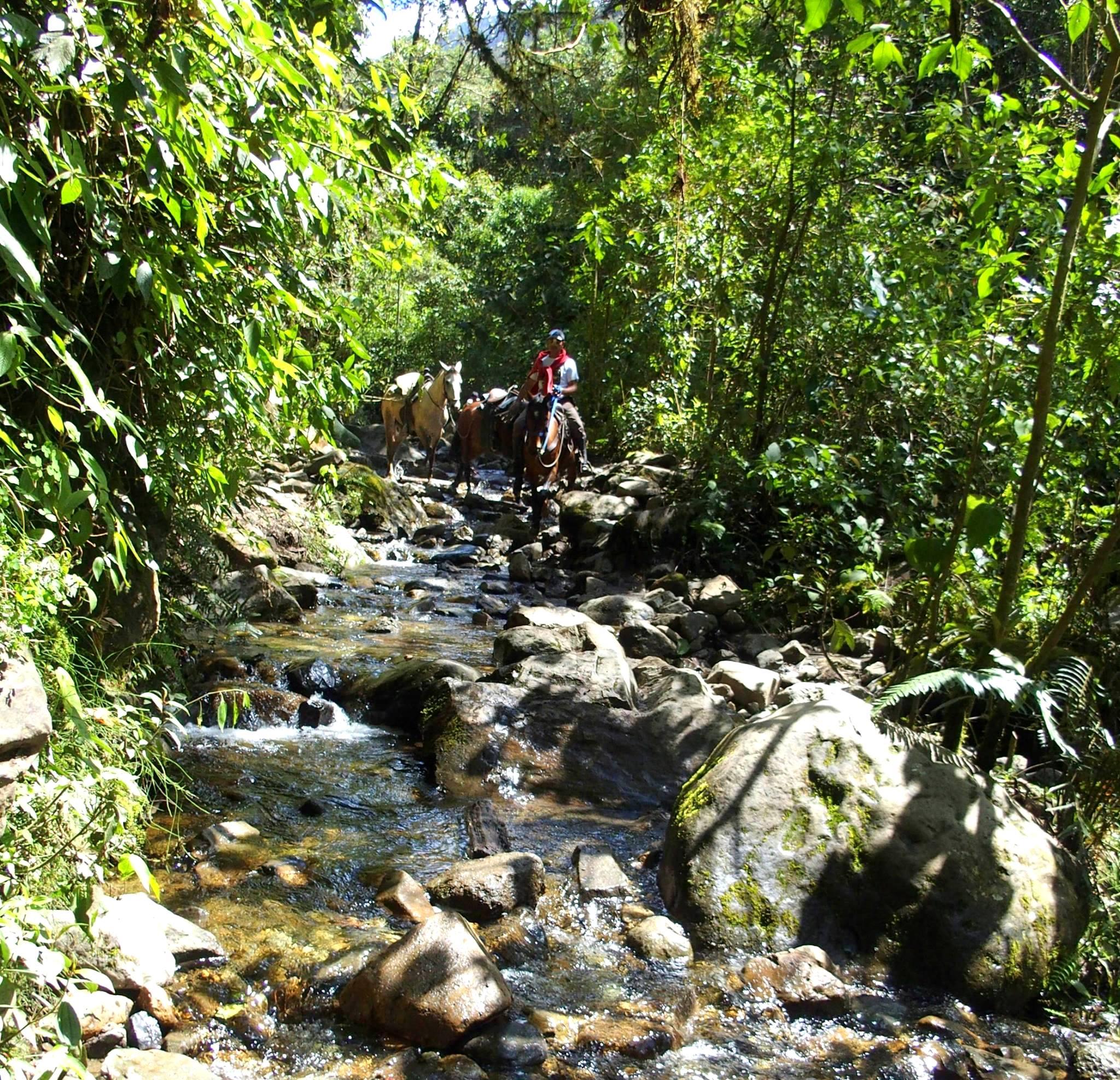 Visite de la Vallée de Cocora à cheval Salento