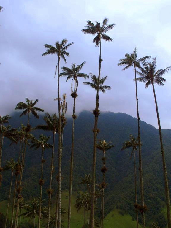 Visiter Salento et les palmiers de la vallée de Cocora Colombie