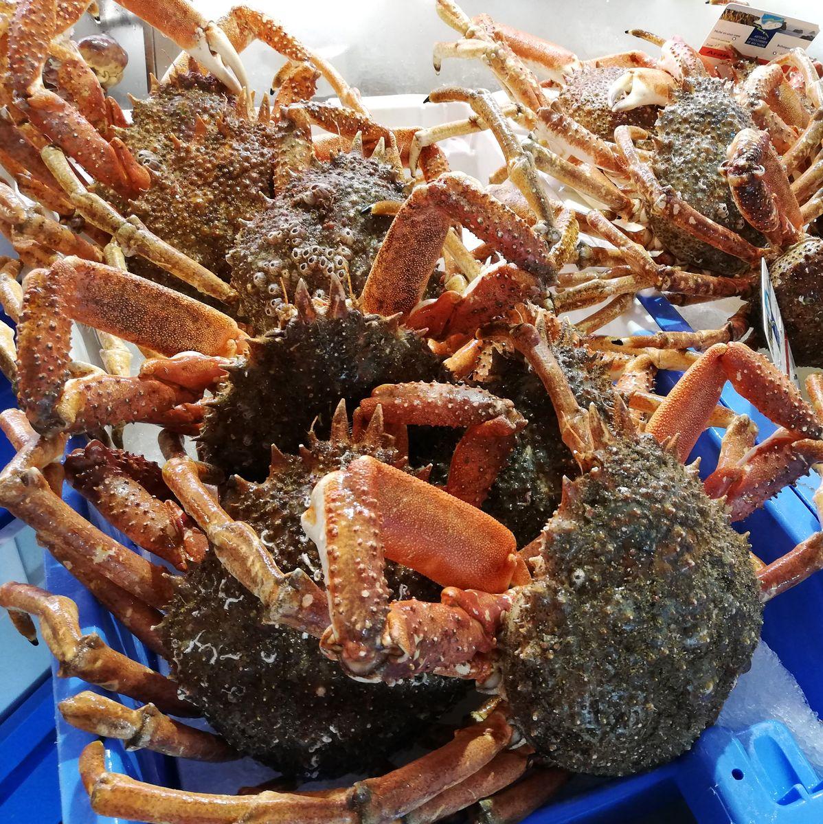 Araignées de mer Bretagne.
